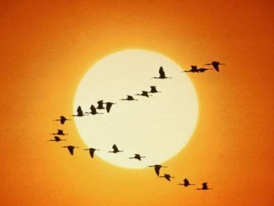 """Justo acabo de regresar de Soria de ver """"Las Edades del Hombre"""" en un bus a la temperatura de mi pueblo... en diciembre... y por ello me he puesto un jersey y me voy a preparar un vaso de leche caliente a pesar de que, todavía a esta hora, en la calle hace un calor que se caen los pájaros..."""