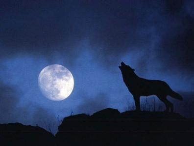 Esta noche hay luna llena... algún licántropo en la sala?