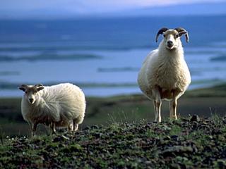 Estoy pensando seriamente en comprarme un rebaño de cabras y tirarme al monte